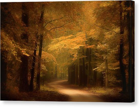 Forest Paths Canvas Print - Golden Forest by Erwin Stevens