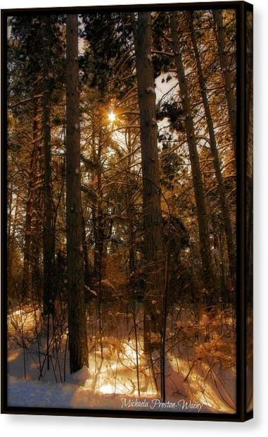 Golden Forrest Canvas Print