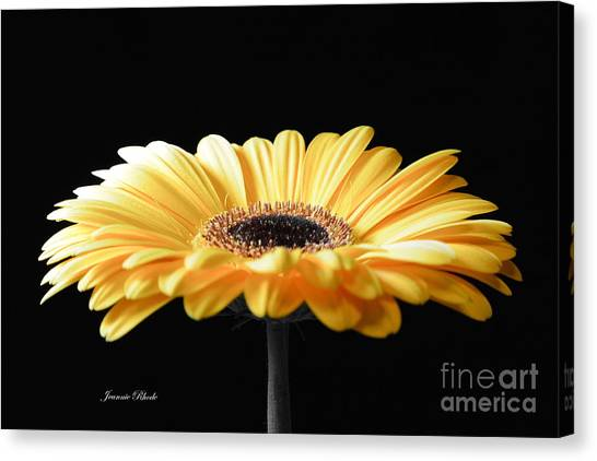 Golden Gerbera Daisy No 2 Canvas Print