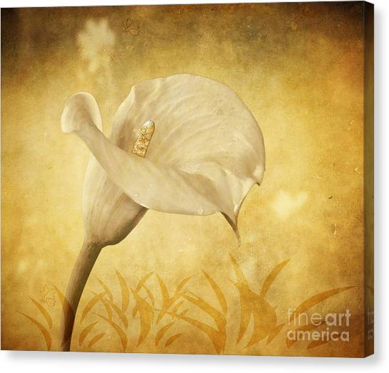 Golden Glow Cala Lily Canvas Print
