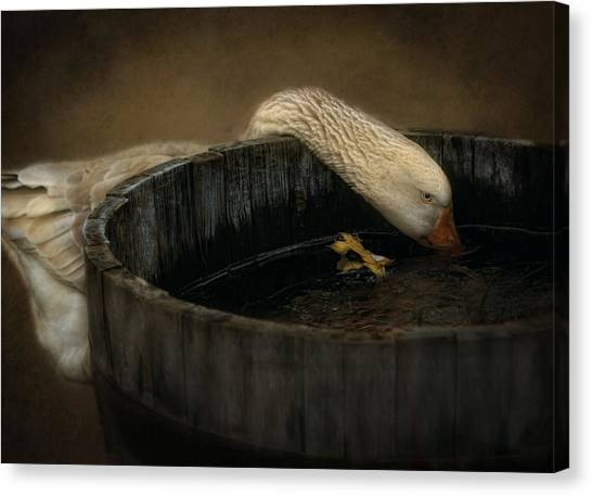 Golden Goose Canvas Print by Robin-Lee Vieira