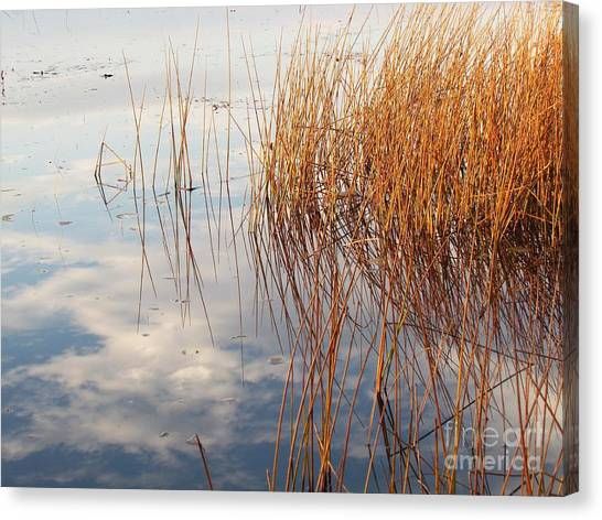Golden Grasses Canvas Print