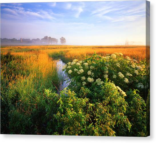 Golden Grassy Glow Canvas Print