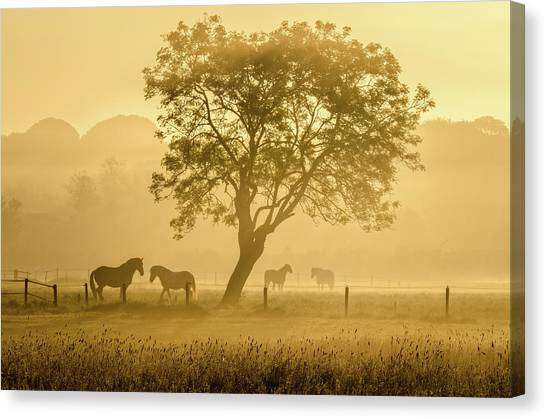 Sunrise Canvas Print - Golden Horses by Richard Guijt