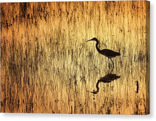 Golden Hour Canvas Print