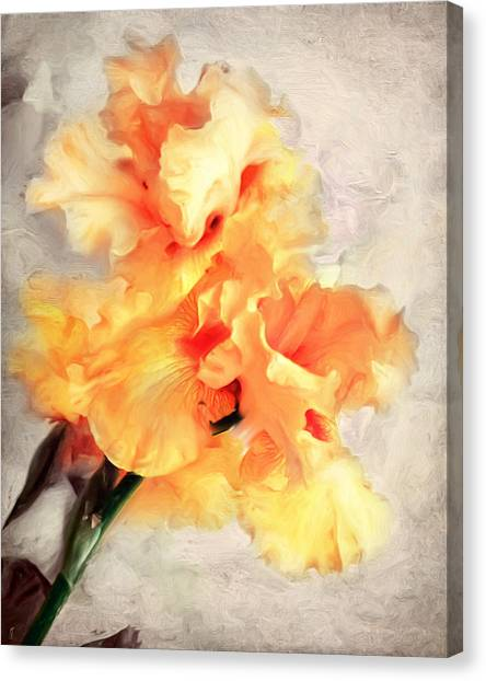 Golden Iris 1 Canvas Print