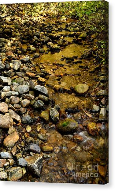 Golden Klo Creek Canvas Print by Phil Dionne