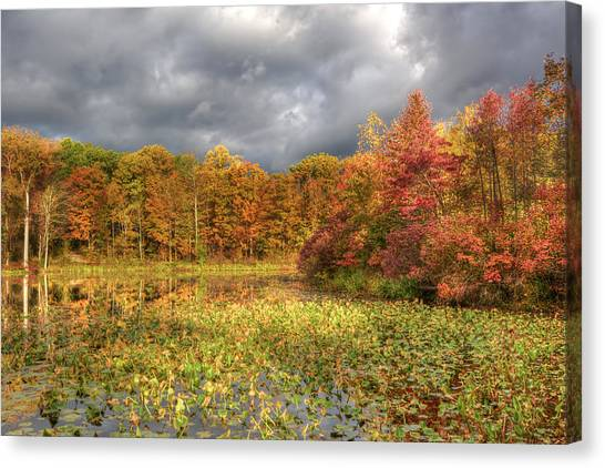 Golden Light And Autumn Leaves Canvas Print