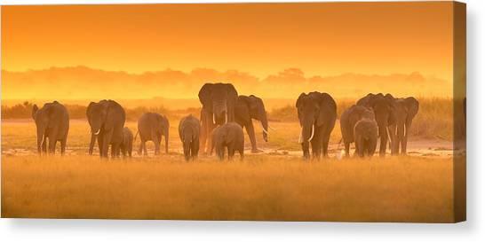 Kenyan Canvas Print - Golden Light by David Hua