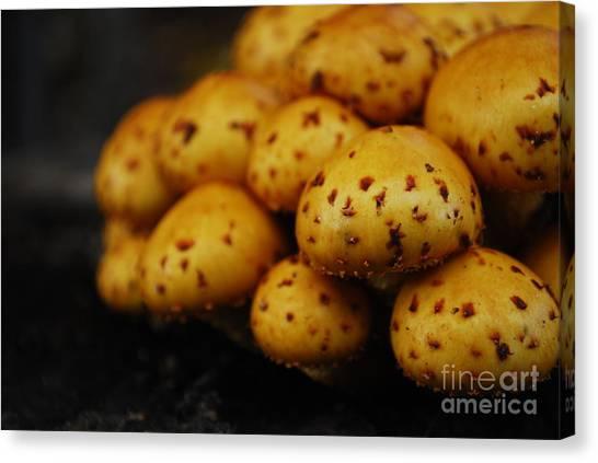Golden Mushrooms Canvas Print by Susan Hernandez
