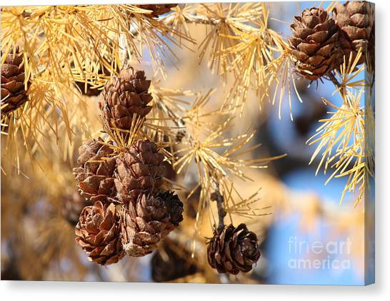 Canvas Print featuring the photograph Golden Needles by Ann E Robson