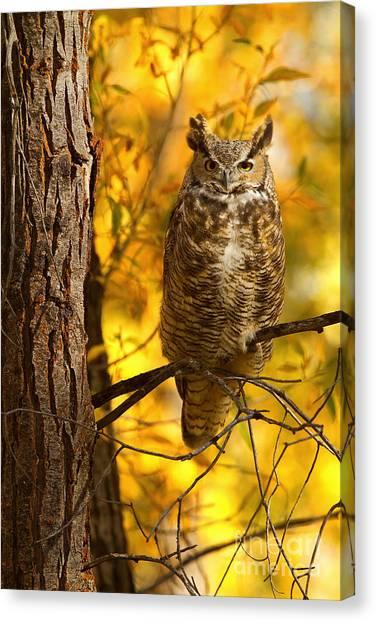 Golden Owl Canvas Print
