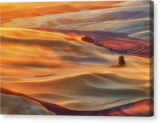 Rolling Hills Canvas Print - Golden Palouse by Lydia Jacobs