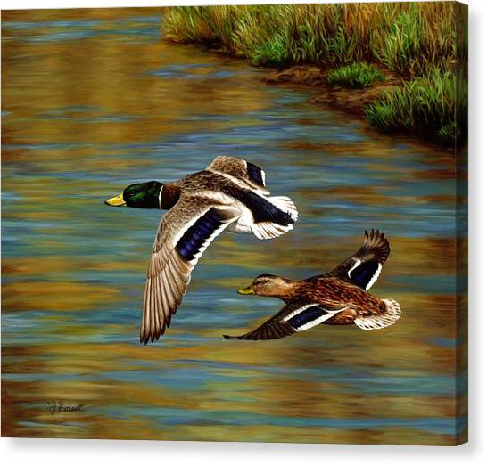 Ducks Canvas Print - Golden Pond by Crista Forest