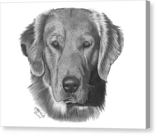 Golden Retriever - 026 Canvas Print