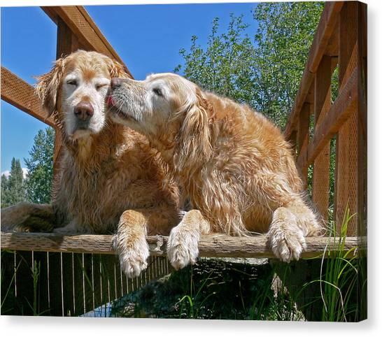 Golden Retriever Dogs The Kiss Canvas Print