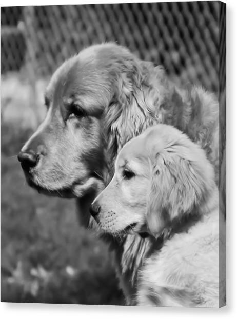 Golden Retrivers  Canvas Print by Paulina Szajek