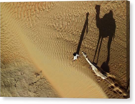 Camels Canvas Print - Golden Shadows by Shoayb Hesham Khattab
