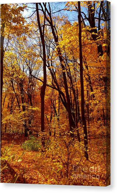 Golden Splendor Canvas Print