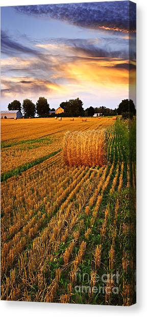 Prairie Sunrises Canvas Print - Golden Sunset Over Farm Field With Hay Bales by Elena Elisseeva