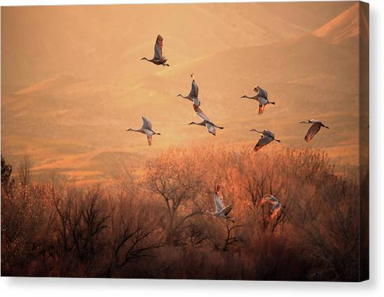 Formation Canvas Print - Golden Time by Hao Jiang