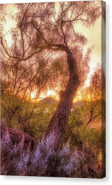 Golden Tree At The Quartz Mountains - Oklahoma Canvas Print