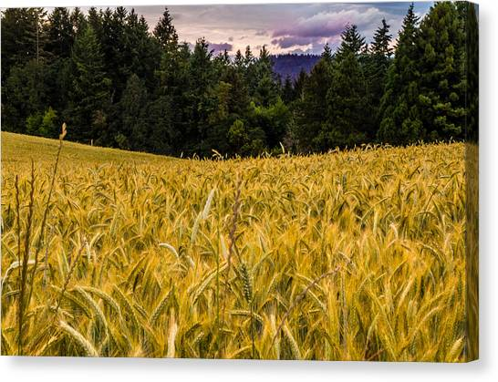 Golden Valley Canvas Print by Denise Darby