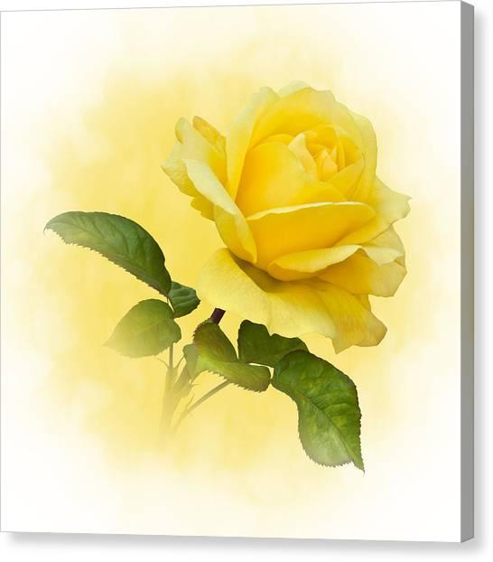 Golden Yellow Rose Canvas Print