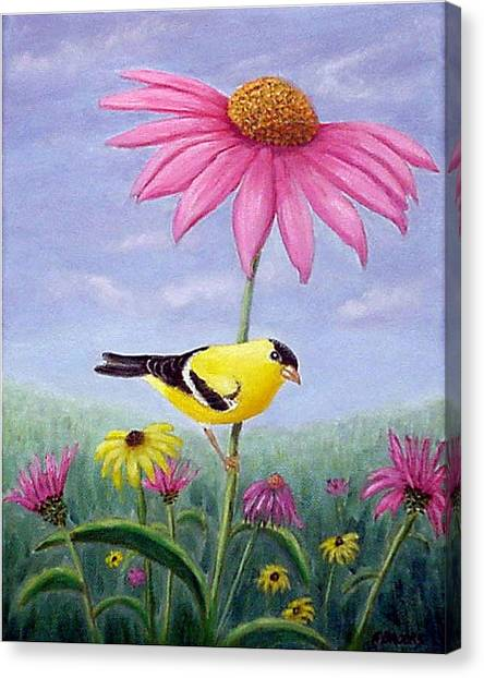 Goldfinch And Coneflowers Canvas Print