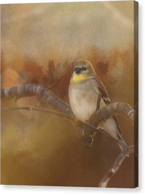 Resting Goldfinch Canvas Print