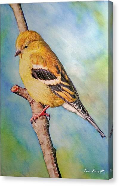England Artist Canvas Print - Goldfinch Female by Ken Everett