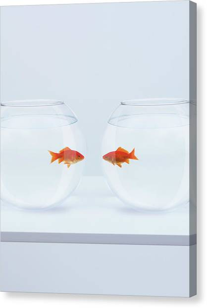 Goldfish In Separate Fishbowls Looking Canvas Print