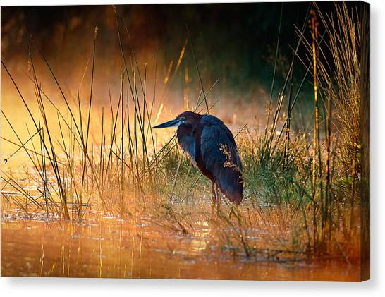 Perching Birds Canvas Print - Goliath Heron With Sunrise Over Misty River by Johan Swanepoel
