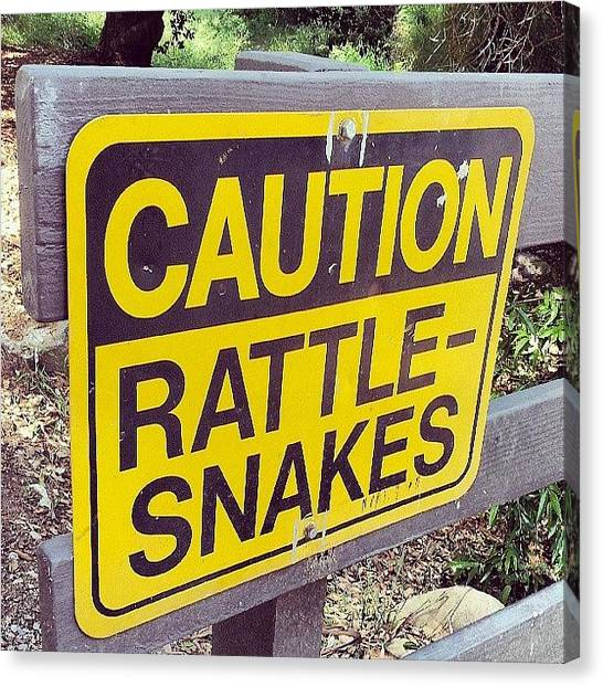 Rattlesnakes Canvas Print - Good Advice. by Brett Dewey