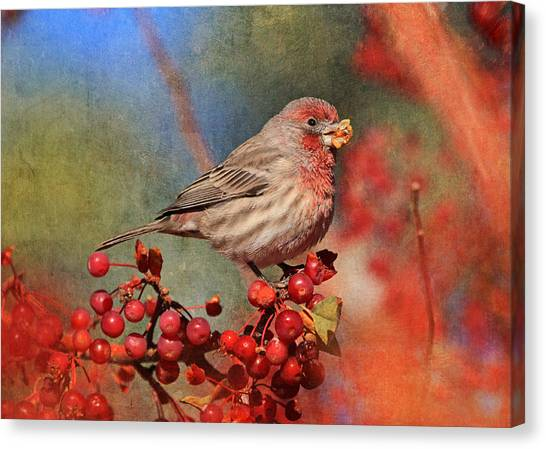 Finches Canvas Print - Good Grief   These Berries Sure Are Messy  by Donna Kennedy