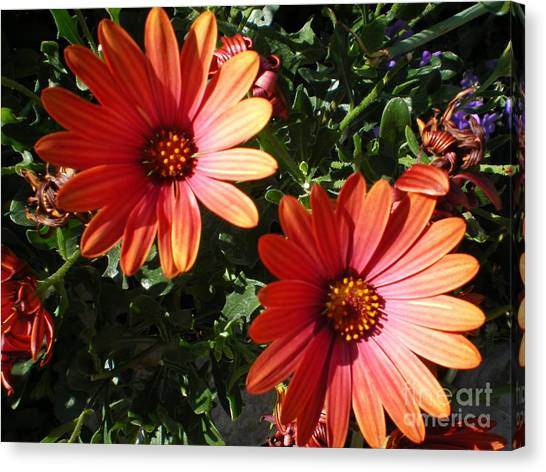 Good Morning Flower. Canvas Print by Ann Fellows