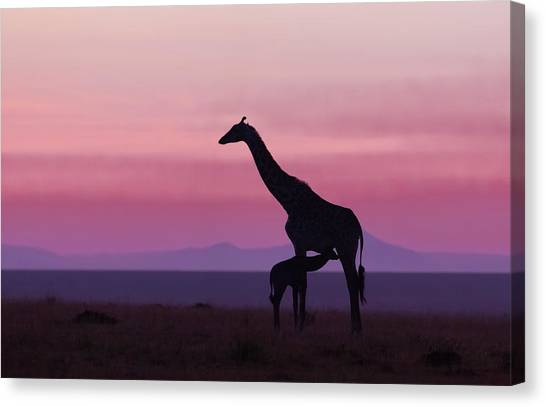 Nursing Canvas Print - Good Morning Masai Mara 7 by Libor Plo?ek