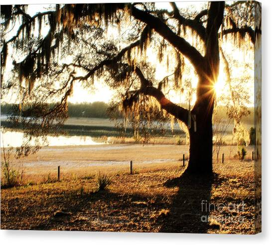 Good Morning Mossy Oak Canvas Print