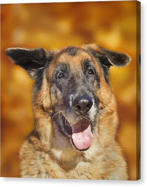 Good Old Boy Canvas Print