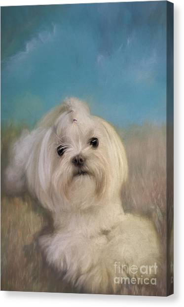 White Maltese Canvas Print - Good Things Come In Small Packages by Lois Bryan