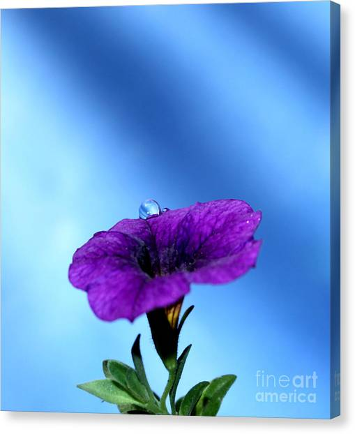 Petunias Canvas Print - Good To Be Alive by Krissy Katsimbras