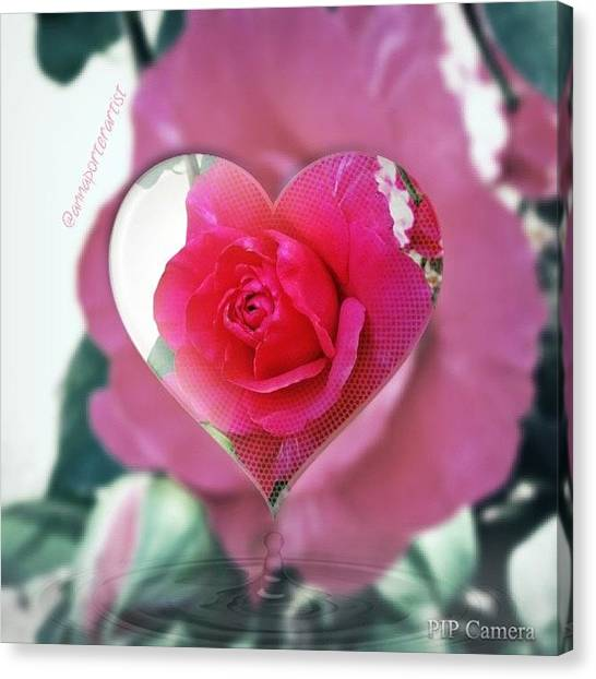 Red Roses Canvas Print - Valentine's Day Rose by Anna Porter