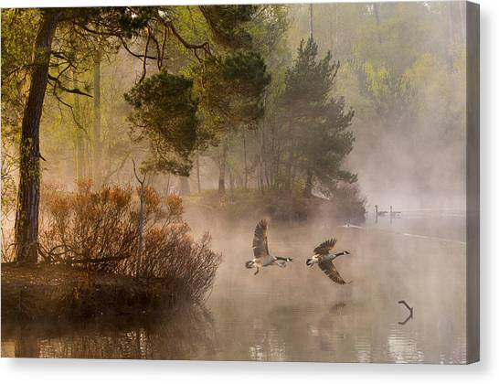 Fir Trees Canvas Print - Goose Fight by Anton Van Dongen