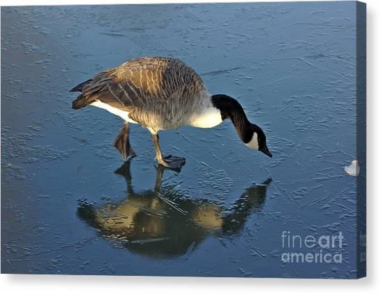 Goose On Ice Canvas Print