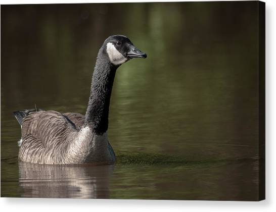 Goose On Pond Canvas Print