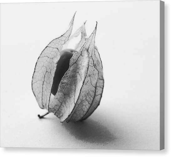 Gooseberry In Black And White Canvas Print