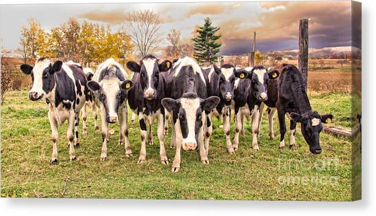 Got Grain? Canvas Print