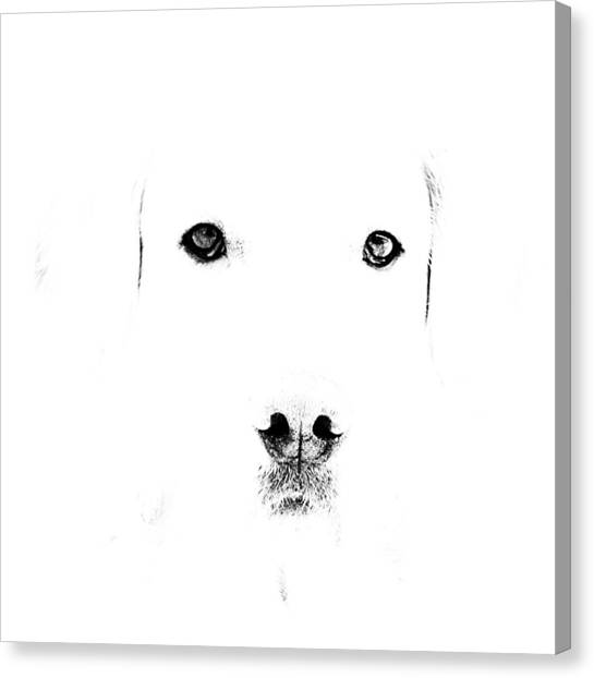 Dog Face Canvas Print