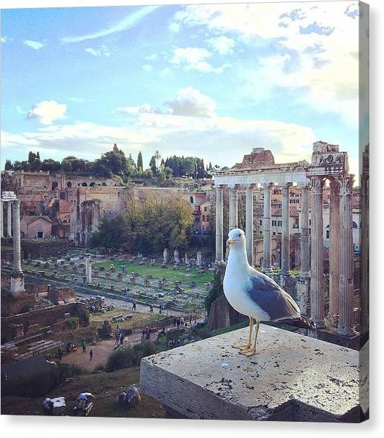 Saturn Canvas Print - Got Photobombed By A Seagull Today! by Frankie Melvin