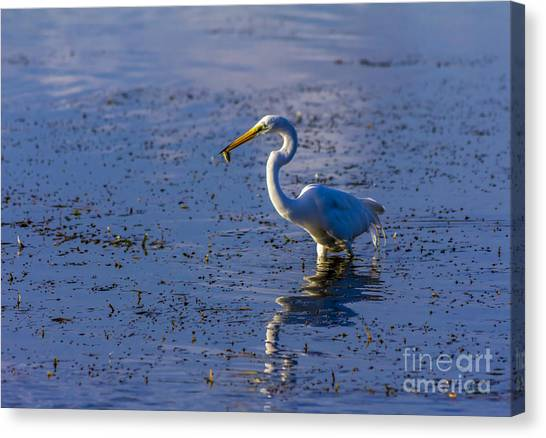 Sandpipers Canvas Print - Gotcha by Marvin Spates